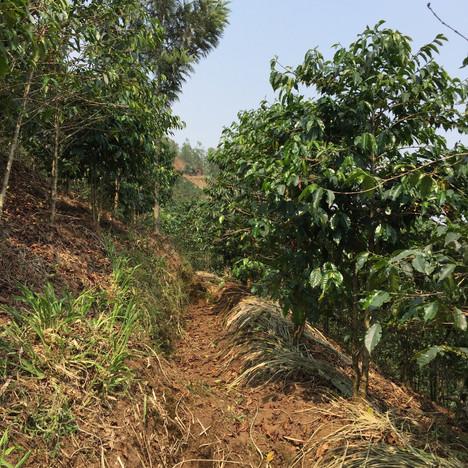 Basins for Erosion Control