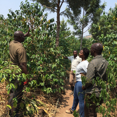 Managment inspecting Nyaruzina Plantation