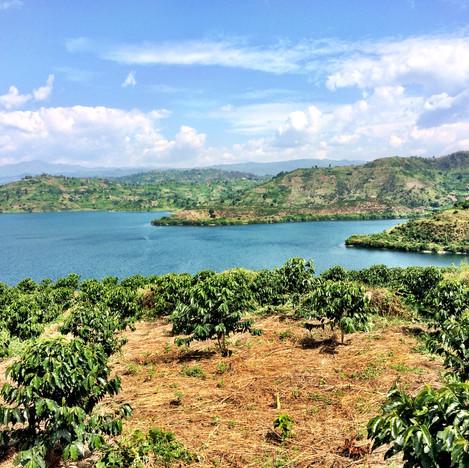 View from Nyaruzina