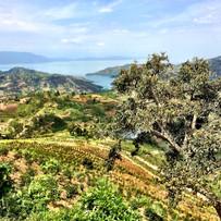 View from Jarama