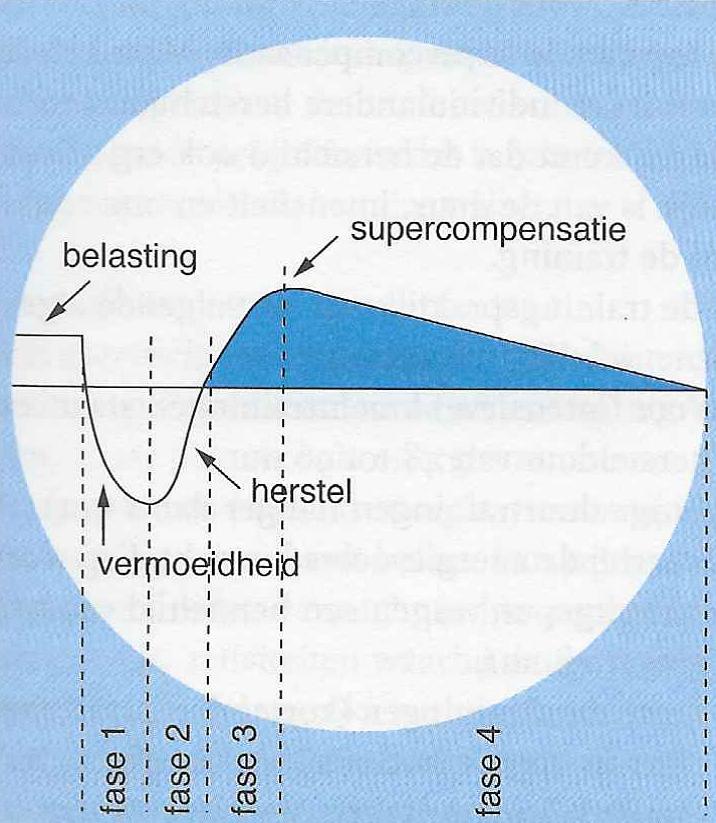 Het schema van supercompensatie | Start Healthy
