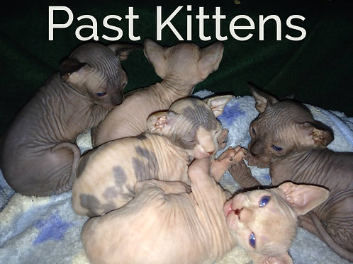 See our Past Kittens!