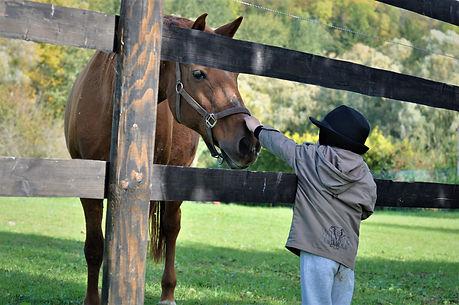 horse-5133657.jpg