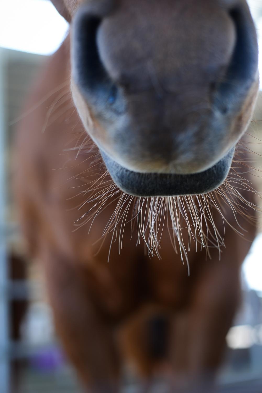 horseHR-8672