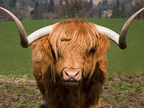 Scotland's Vegan Animal Sanctuaries, Our Rescued Animals