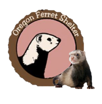 OFS Web Logo.png