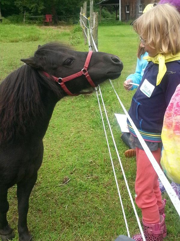 pony-greets-girl