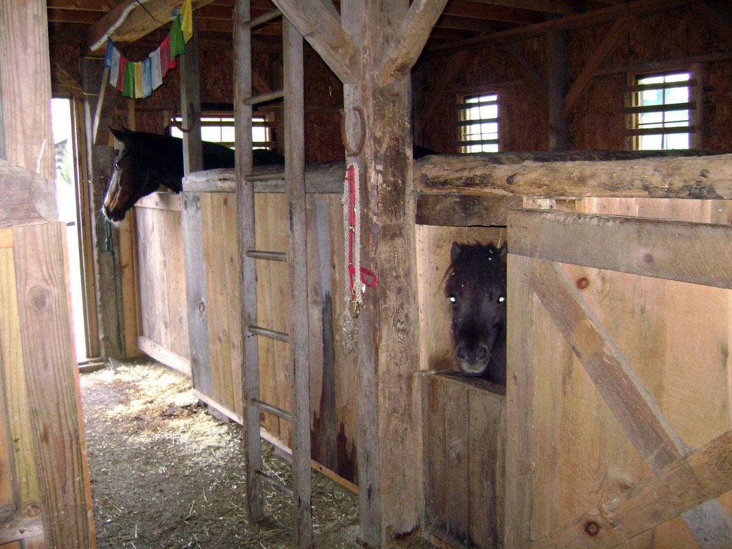 in-the-barn