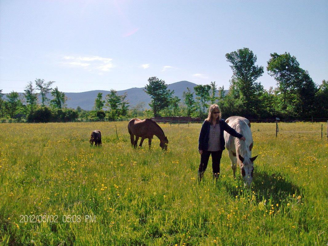 horses-field-mountain
