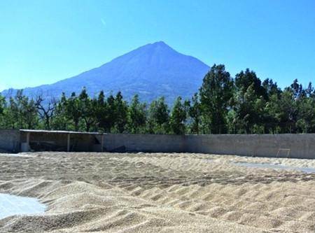 Featured Single Origin: Guatemala