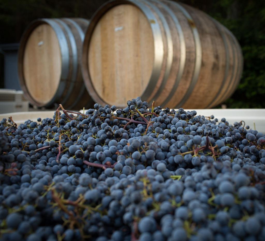 barrells and grapes