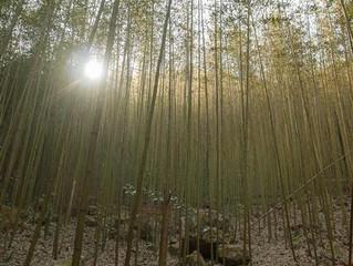 就是愛爬之親子登山 - 八仙山國家森林遊樂區