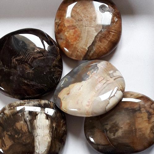 Galet Bois fossile, bois pétrifié, bois silicifié