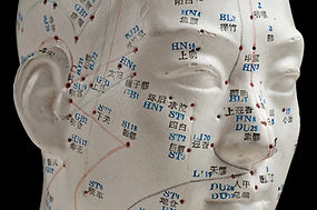 Model showing acupuncture points on the face