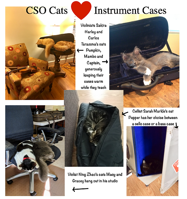 cats and cases.png