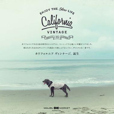 今日は、カリフォルニアヴィンテージのお話です。__California Vint