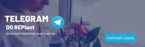 Participe agora do nosso canal no Telegram