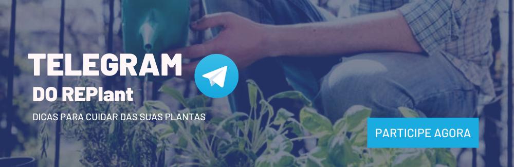 Entre para o nosso canal no Telegram