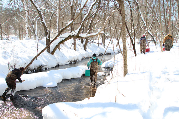 What are common prey for large trout in Minnesota streams?