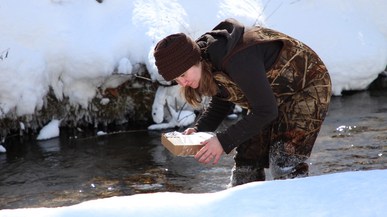 What are trout feeding patterns through the winter months?
