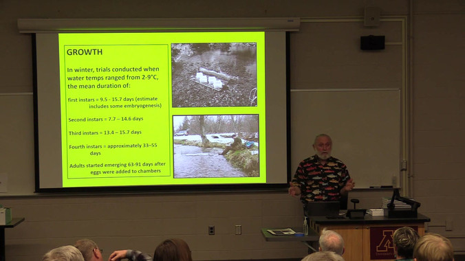 How do aquatic insects grow in their habitats along streams?