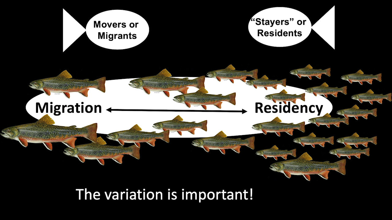 Do individual trout have different movement tendencies? Or do trout have different personalities?