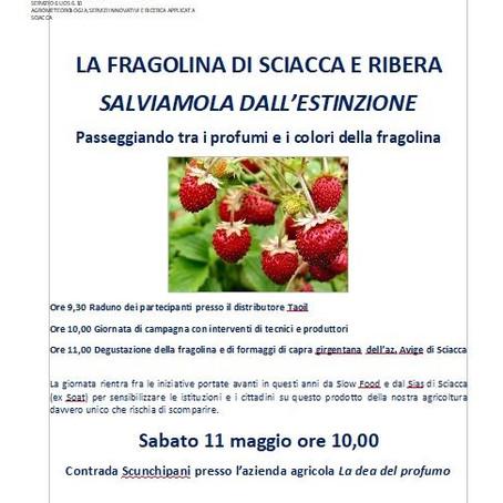 La fragolina di Sciacca e Ribera, salviamola dall'estinzione