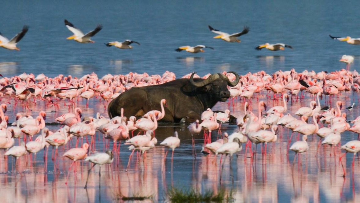 Visit The Soda Lakes of Rift Valley.jpg