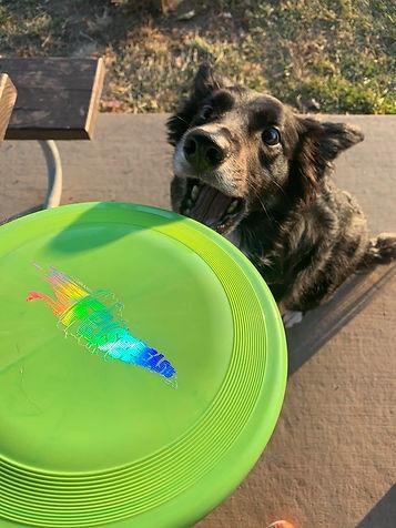 Frisbeeasts Frisbee