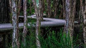 boardwalk-142632.jpg