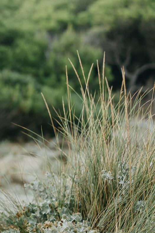 112_POR_anke_web_GRASS.jpg