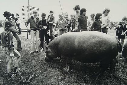 nijlpaard.png