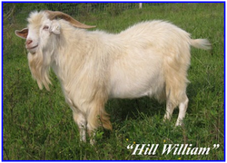 TNB Conway (Hill William)