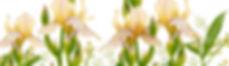 8flower_1920x480.jpg