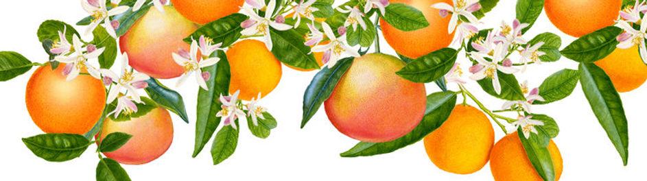 Tangerine+Essential+Oil+Elixir+low+res19