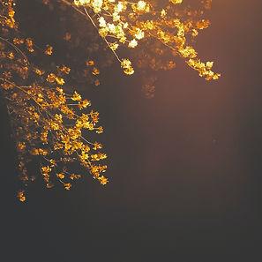 月も春もジャケットjpg.jpg