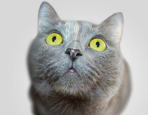 Serious Kitten_edited_edited_edited_edited.jpg