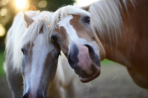 Pferdamluuren.jpg
