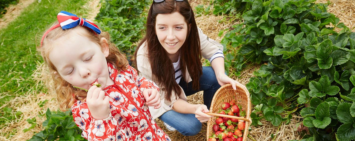 Lucy-Strawberrys-12.jpg
