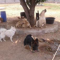 dog social activity