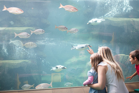 people looking at fish tank