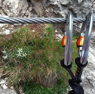 Hunting for edelweiss
