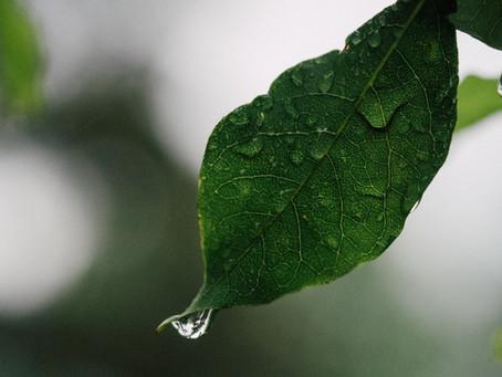 След дъжда