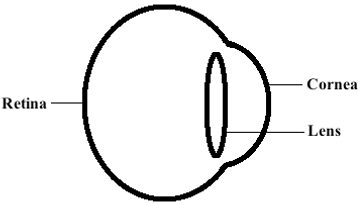 simple diagram eye
