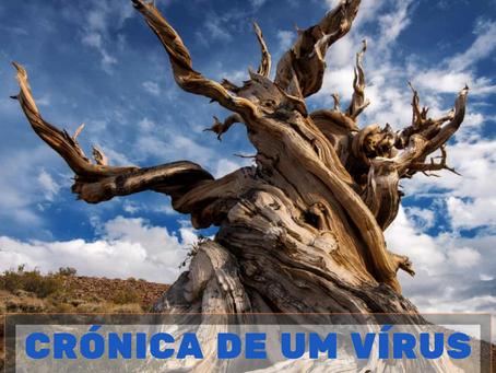 Crónica de um vírus - Dia 15: Morrer como uma árvore