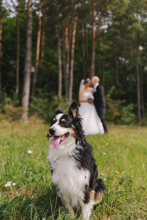 Hochzeitsfotos mit Hund