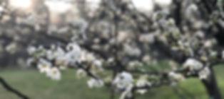 IMG-4472_edited.jpg