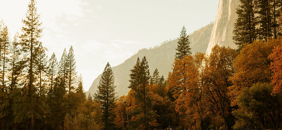 Trees and mountaints in Yosemite National Park