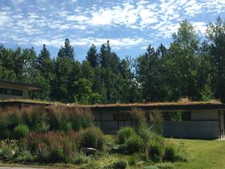 Camo roof