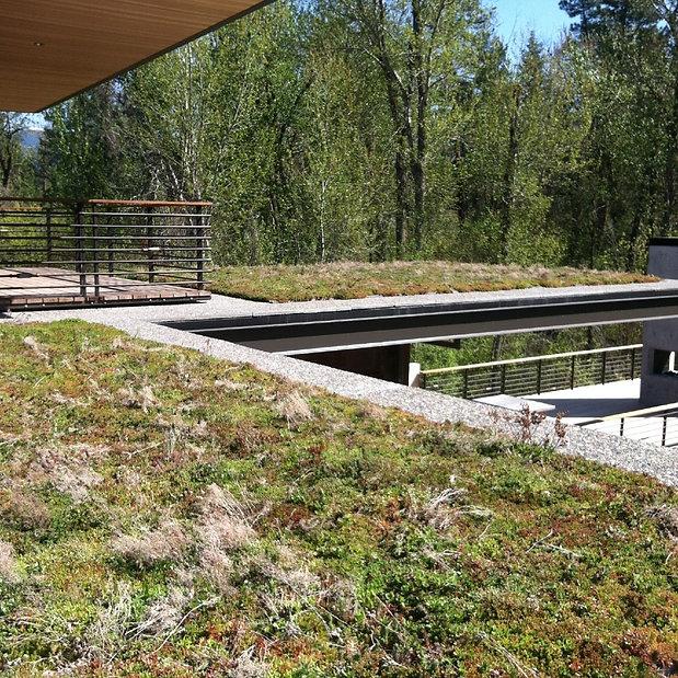 Green roof Montana